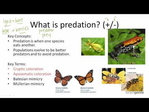 15.2.3 What is predation