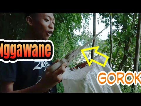 Ngarit Karo Gorok#CNG NGAPAK