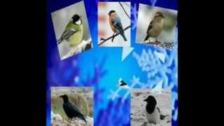 Видеоурок Покормите птиц зимой    x264