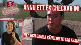 REAGERAR PÅ EX ON THE BEACH CELEBRITY | EP 17