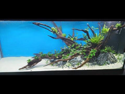 Discus Tank Aquascape: How to Setup 450l Discus Planted Tank