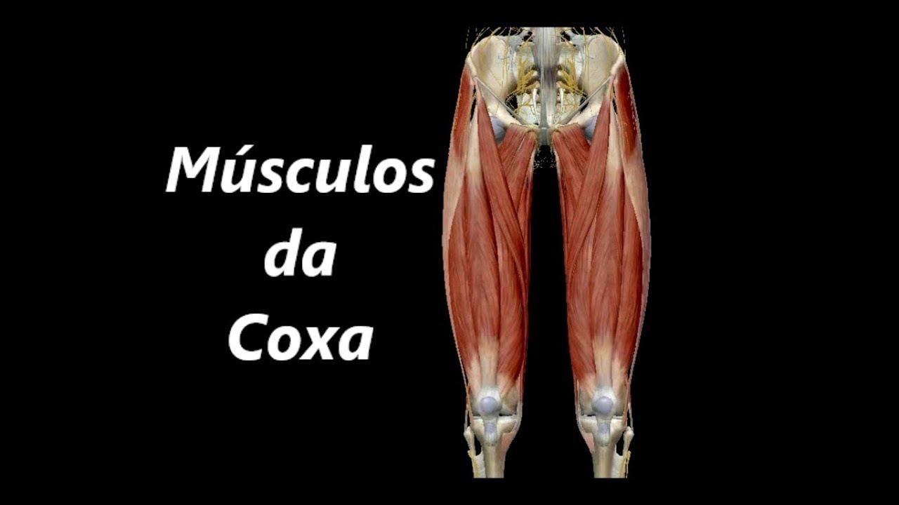Anatomia dos Músculos da Coxa em 3D - YouTube