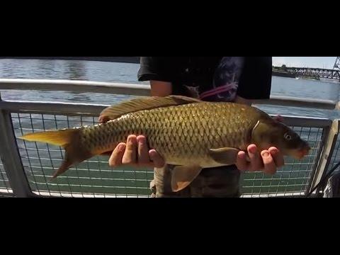 Carp fishing, Willamette River, Portland Oregon Waterfront Park