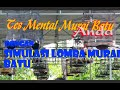 Tes Mental Murai Batu  Anda Sebelum Turun Gantangan Dgn  Simulasi Lomba Murai Batu  Mp3 - Mp4 Download