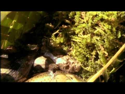 Kau Fangota: Gleaners of the Sea Part 1