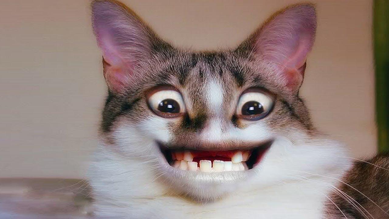 Я Ржал Пол Часа/Смешные Животные, Коты Собаки и Другие Приколы | Смешные Животные Смотреть в Ютубе