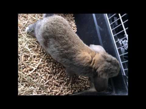 konijnen #1