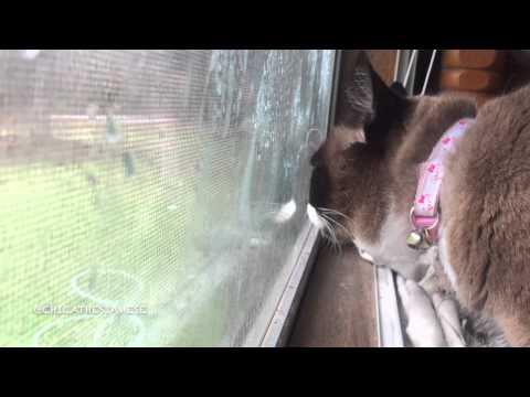Cat licking window youtube for Window licker meme