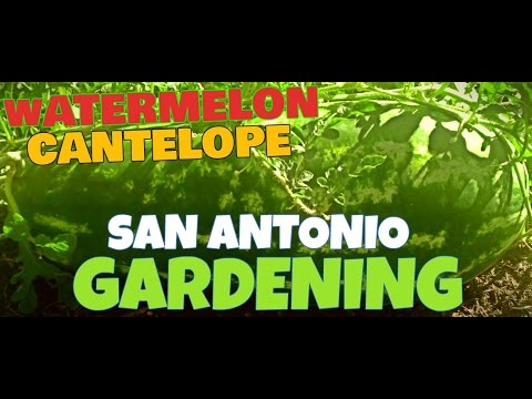 SAN ANTONIO GARDENING 3