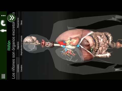 Órganos 3D (anatomía) - Apps en Google Play