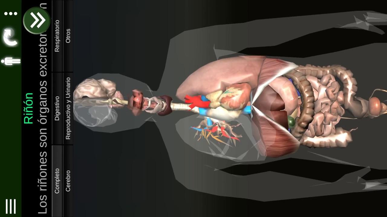 Organos 3D (Anatomia) para Android. \