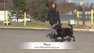 "German Shepherd ""argos"" Before And After Video! Best Dog Trainers In Virginia"
