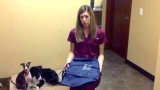 DIY Grocery Bag Harness for Dogs With Rear Limb Weakness