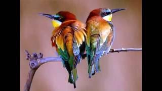 Beautiful Birds Wallpaper Photo