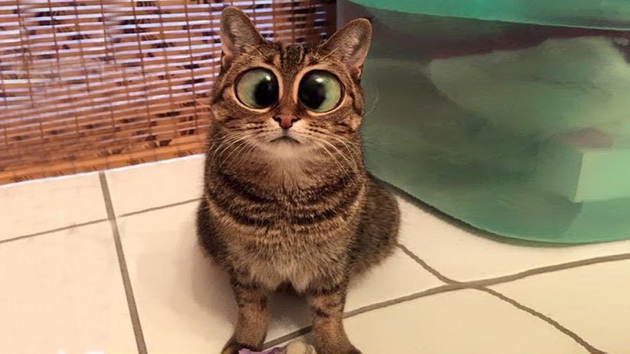 Смешные картинки про кошек смешно до слез