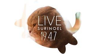 생방송-수리노을-고양이가족-19-4-7-live-suri