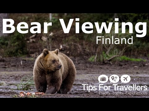See Why Bear Watching In Finland Is Totally Incredible, And Something You Have To Do..
