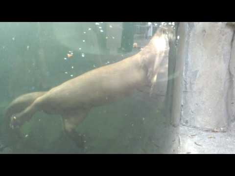 Otter exhibit @ the Sequoia Zoo - Eureka, CA
