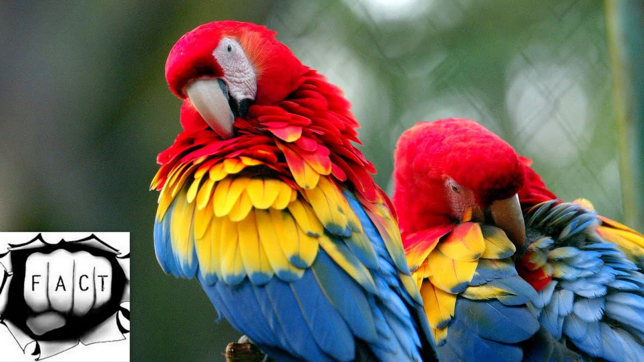 Top 10 Most Colorful Animals In