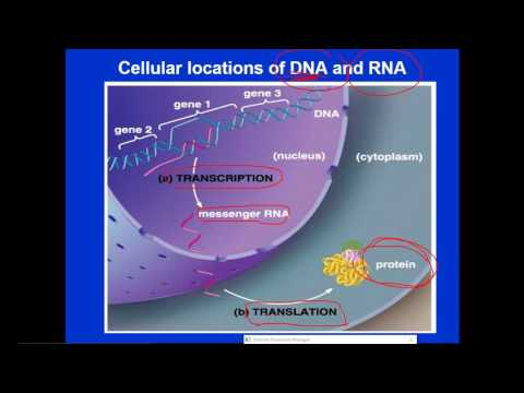 Molecular Biology - dr. Jehad -- Introduction