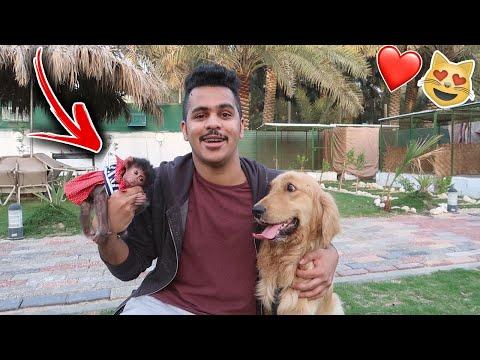 كلبي روكي هجم على ( القرد ) الجديد بسبب !! 💔😱