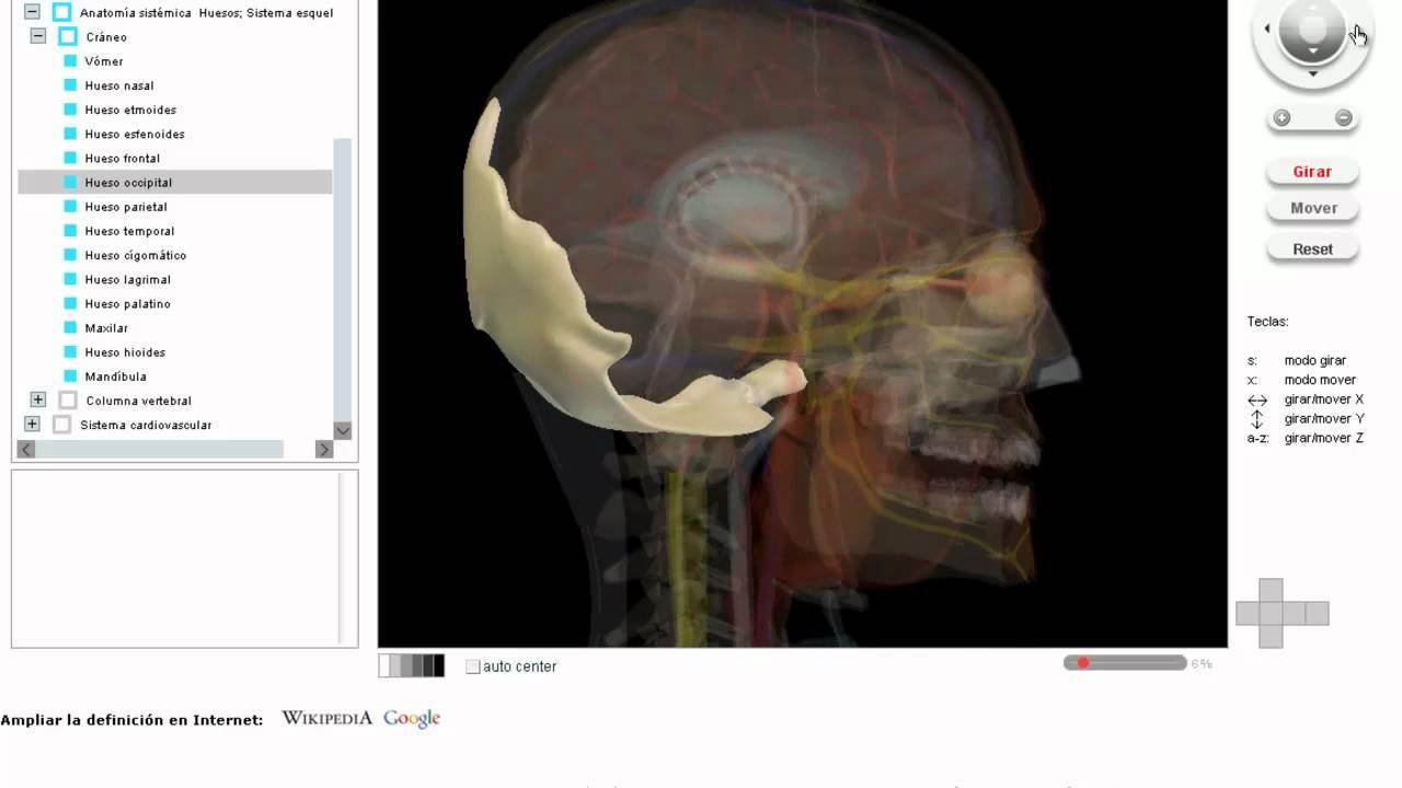 Osteo-Articular Cráneo - VisionMedicaVirtual - YouTube