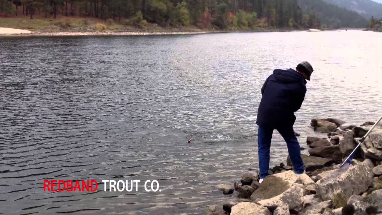 Fall chinook salmon on steelhead rod clearwater river for Bobber fishing for steelhead
