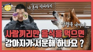 [Eng sub] do dogs feel left out if people eat without them?|Hunter Kang's Q&A