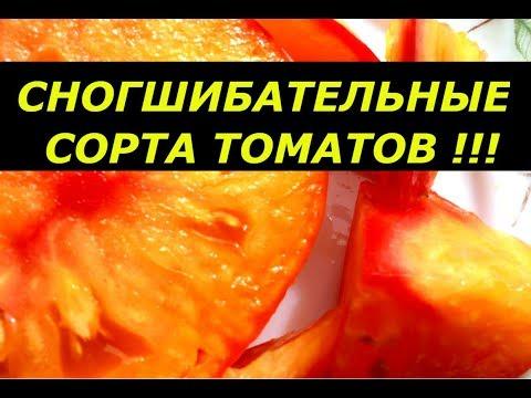 СНОГСШИБАТЕЛЬНЫЕ СОРТА ТОМАТОВ , ПРОВЕРЕНО НА СЕБЕ/ ОБЗОР ТОМАТОВ КАДЗАСОВОЙ И ДР. ДЛЯ НОВОГО СЕЗОНА | урожайность | выращивание | фитофтороз | фитофтора | пикировки | теплица | рассада | урожай | томаты | семена
