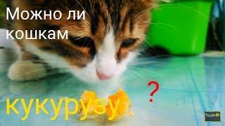 Можно ли кошкам КУКУРУЗУ?