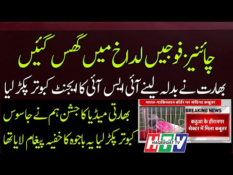 Haqeeqat TV: India is Becoming Laughing Stock by Capturing Pakistani Pigeon