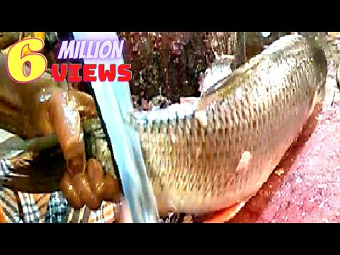 Live fish cutting skills 2019 in fish market | fastest Rohui fish cutting.