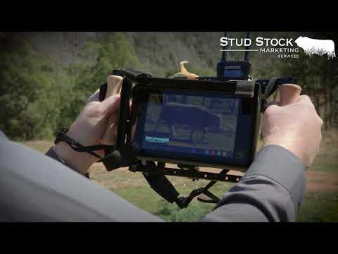 Stud Stock Marketing Services