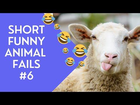 Short Funny Animal Fails #6 #Shorts