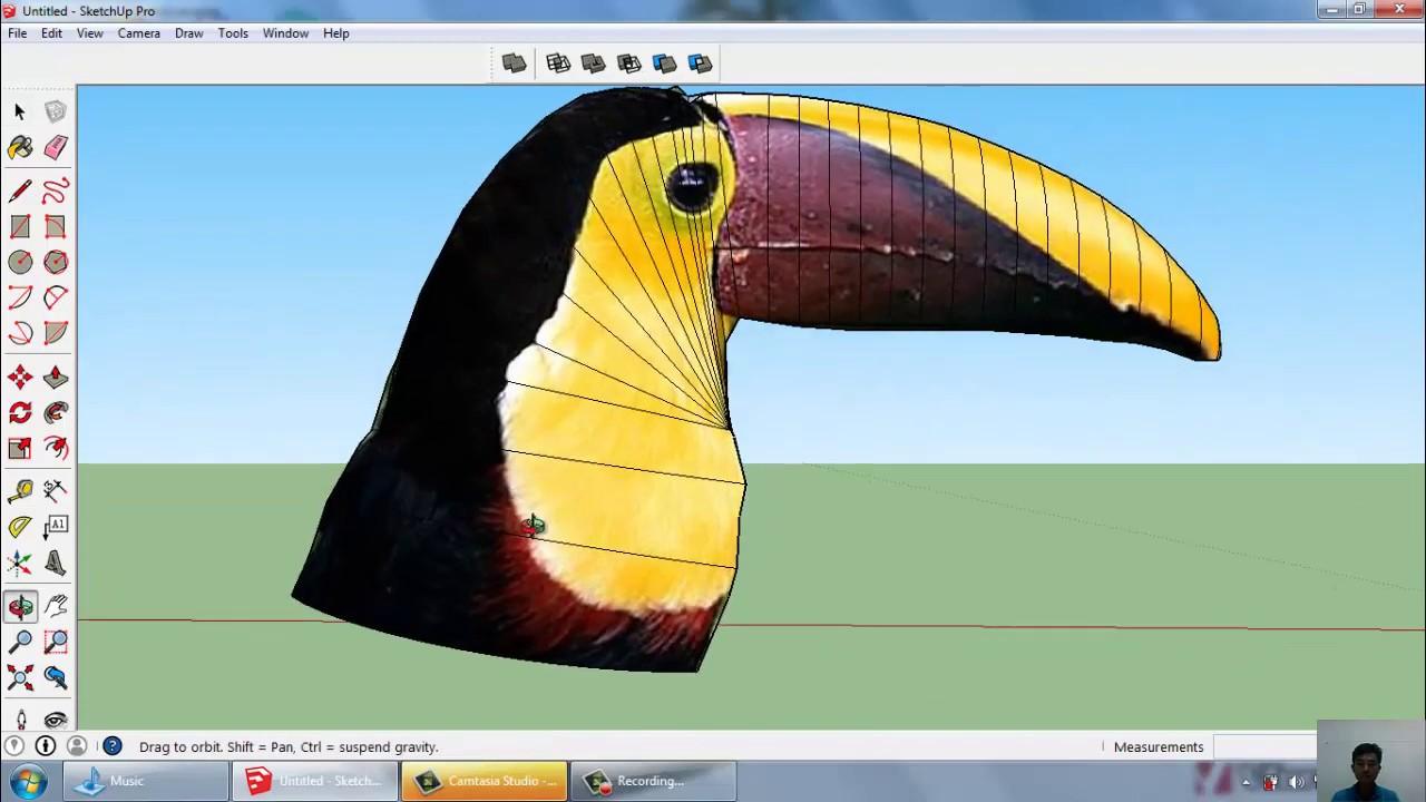 Sketchup Con chim Toucan   Bird Toucan