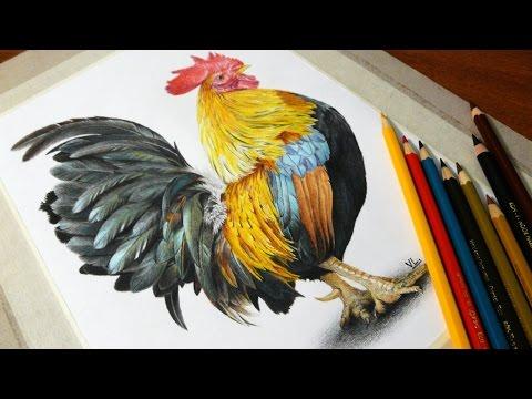 Рисунок петуха цветными карандашами к 2017 году
