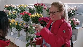 обзор Кенийской кустовой розы на плантации | Interfloralogistic - цветы оптом