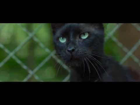 WILDHEXE Trailer German Deutsch (2018)