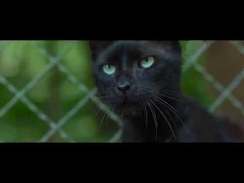 WILDHEXE Trailer German Deutsch (2018)