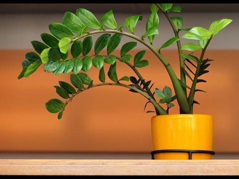 Многолетние растения — Википедия