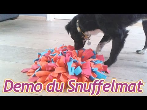 demonstration et explication du snuffelmat ou tapis de fouille pour chien