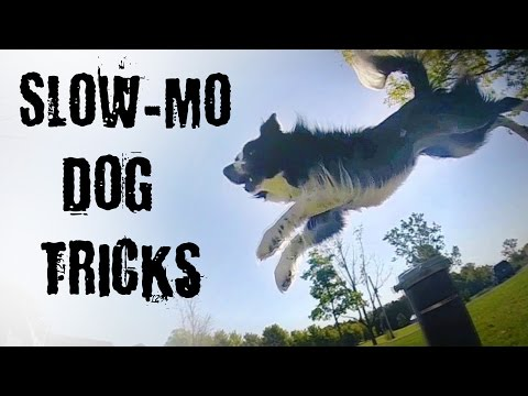 Slow Motion Dog Tricks with Nana the Border Collie
