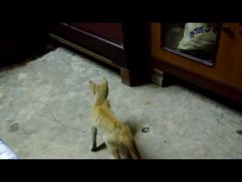My Pet Cat-23