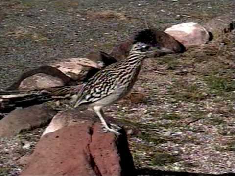 Mojave desert wildlife