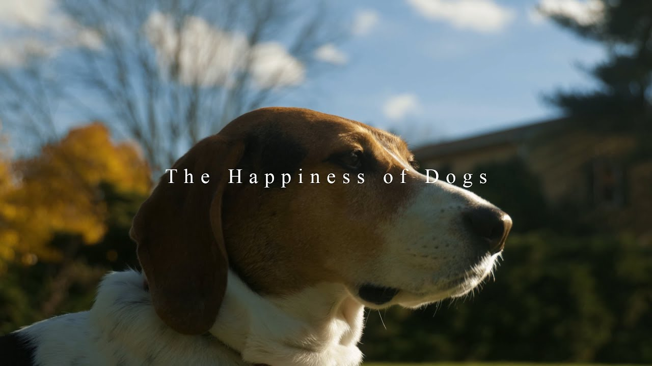 """""""The Happiness of Dogs"""""""