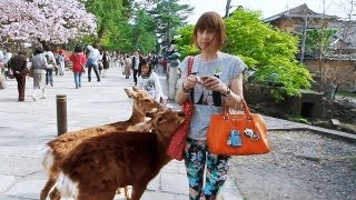 奈良公園の鹿 ラブリー編 DEER in NARA PARK -Lovely Version- <HD1080p> thumbnail