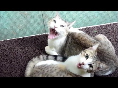 Cat's and dog's reactions when owner came back home - Cats Vs Dogs - Funny reactions of animals