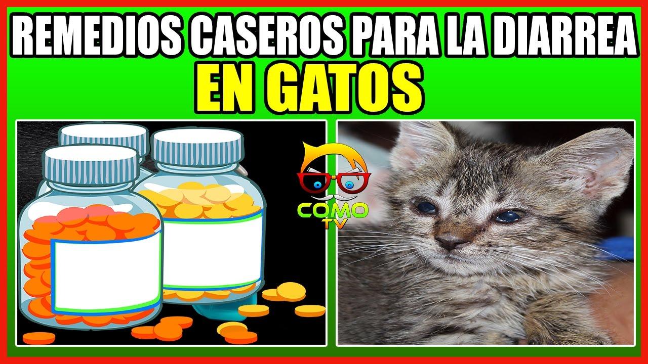 💊 REMEDIOS CASEROS PARA LA DIARREA EN GATOS - YouTube