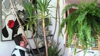 pruning yucca