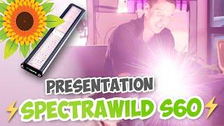 Présentation de la SpectraWILD S60 ! Nouvelle barre horticole pour la culture indoor - LEDs SAMSUNG